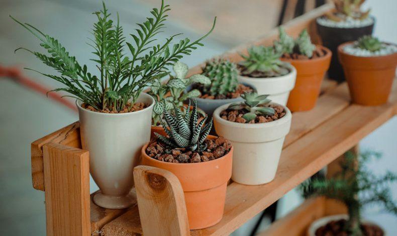 Decoración en casa: plantas de interior